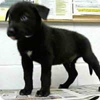 Adopt A Pet :: ROLAND - Houston, TX