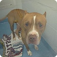 Adopt A Pet :: Wayne - Gainesville, FL