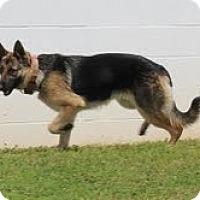Adopt A Pet :: Sydney - Staunton, VA