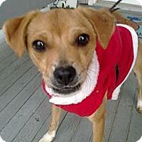 Adopt A Pet :: Percy - Cumberland, MD