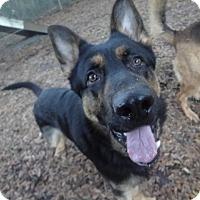 Adopt A Pet :: Griz - Green Cove Springs, FL