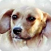 Adopt A Pet :: Hazel - Upper Sandusky, OH