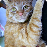 Adopt A Pet :: George of the Jungle - Toledo, OH