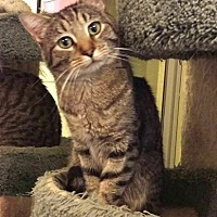 Adopt A Pet :: Timmy - Chino Hills, CA
