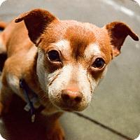 Adopt A Pet :: Ernie - Meridian, ID