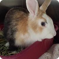 Adopt A Pet :: Casino - Westminster, CA