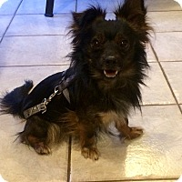 Adopt A Pet :: Prince in CT - Manchester, CT