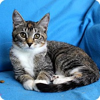 Adopt A Pet :: I'M AVA AND I'M THE SWEET ONE! - jacksonville, FL