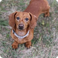 Adopt A Pet :: Redmond - Pearland, TX