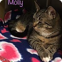 Adopt A Pet :: Molly - El Dorado Hills, CA