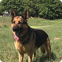 Adopt A Pet :: Manix - Fort Worth, TX