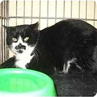 Adopt A Pet :: Eloise - Iroquois, IL