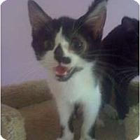 Adopt A Pet :: Brittany - Mobile, AL