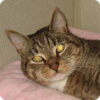 Adopt A Pet :: KENZE - 2014 - Hamilton, NJ
