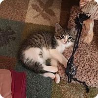 Adopt A Pet :: Sierra - Ogallala, NE