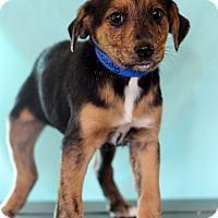 Adopt A Pet :: Woody - Waldorf, MD