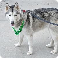 Adopt A Pet :: SKYE - Powder Springs, GA
