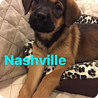 Adopt A Pet :: Nashville - Mount Laurel, NJ