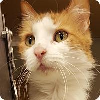 Adopt A Pet :: Suzette - Grayslake, IL