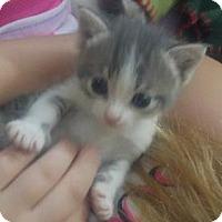 Adopt A Pet :: .Molly - Baltimore, MD