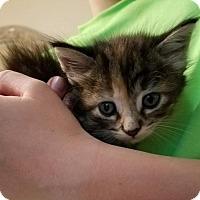 Adopt A Pet :: Katie - Boynton Beach, FL