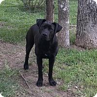 Adopt A Pet :: Maggie Mae - Spring, TX