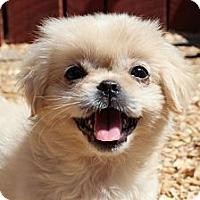Adopt A Pet :: Pearl - Foster, RI