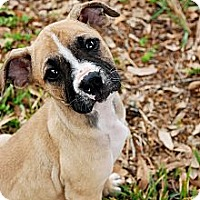 Adopt A Pet :: Betty - Orlando, FL