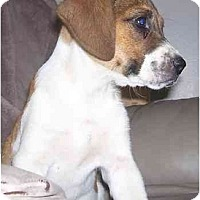 Adopt A Pet :: Taysia - Adorable - Chandler, IN
