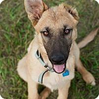 Adopt A Pet :: Albus - Saskatoon, SK