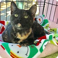 Adopt A Pet :: Bristol - Foothill Ranch, CA