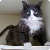 Adopt A Pet :: Berry - Gaylord, MI