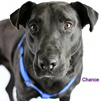 Adopt A Pet :: Chance - Bloomington, MN