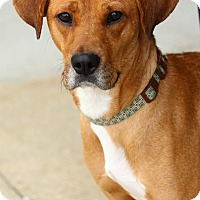 Adopt A Pet :: Claire - Lafayette, IN