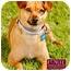 Photo 1 - Dachshund/Chihuahua Mix Dog for adoption in Marina del Rey, California - Emvie