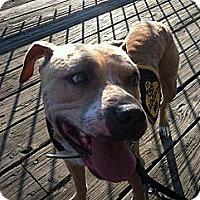 Adopt A Pet :: Momo - Dennis, MA