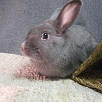 Adopt A Pet :: Adrian - Newport, DE