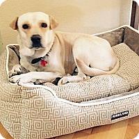 Adopt A Pet :: Sharpie - Scottsdale, AZ
