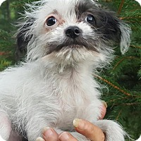 Adopt A Pet :: Avery - Medora, IN