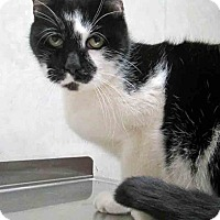 Adopt A Pet :: Oreo - Downers Grove, IL
