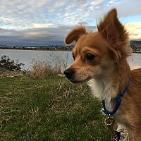 Adopt A Pet :: NAE NAE - Emeryville, CA
