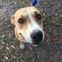 Adopt A Pet :: Willow - Houston, TX
