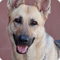 Adopt A Pet :: Alexis von Amberg - Los Angeles, CA