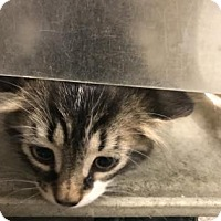 Adopt A Pet :: Skribbles - Philadelphia, PA