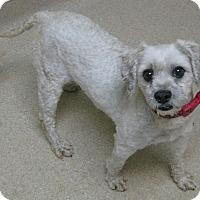 Adopt A Pet :: Diesel - Gary, IN