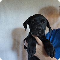 Adopt A Pet :: Hunk - Oviedo, FL