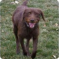 Adopt A Pet :: Yesenia - Meridian, ID