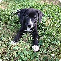 Adopt A Pet :: Jagger~pending - Adamsville, TN