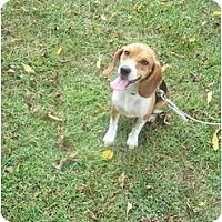 Adopt A Pet :: Nellie - Indianapolis, IN