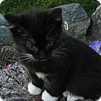 Adopt A Pet :: Messina - Clearfield, UT